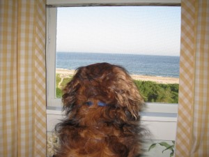rosie looks at the beach