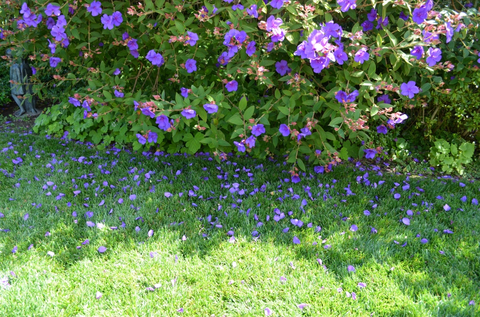 Look at all the purple flowers you can find!